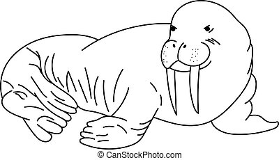 Walrus drawing. Line art walrus. Vector illustration