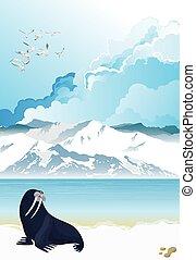 Walrus on arctic landscape - Picturesque Antarctic landscape...