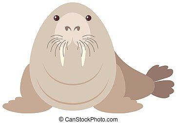 Walrus on white background