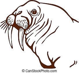 Walrus Portrait - vector drawing of a walrus face