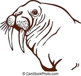 Walrus Portrait - vector drawing of a walrus face