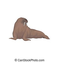 Walrus sea animal vector Illustration on a white background