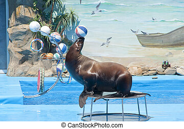 Walrus with ball at dolphinarium