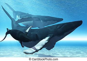 walvis, toneelstuk