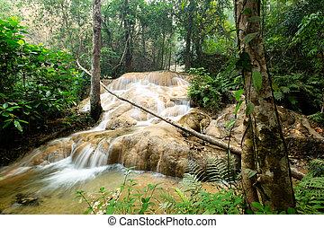 wan, cantó, cascada, pha, sri, chiangmai, parque, thailand., dang, nacional