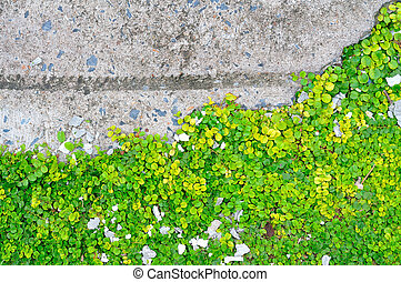 wand, grünes blatt
