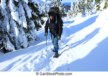 wandelaar, bergen, winter