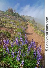 wandelend spoor, in de bergen
