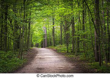 wandelend spoor, in, groen bos