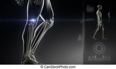 wandelende, man, met, knie, scanderen