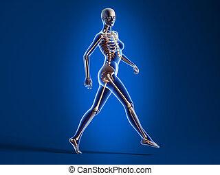 wandelende, vrouw, met, been, skeleton.