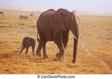 wandelende, zijn, moeder, achter, elefant, kleine, kalf