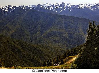 wandern, in, der, grün, täler, nadelbäume, schnee, berge, hurricaine, bergrücken, olympischer nationalpark, staat washington , pazifischer nordwesten, bergrücken, linie