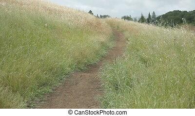 wandern weges, auf, a, grasbedeckt, hügel