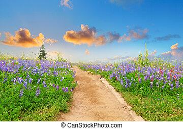 wanderpfad, mit, wilde blumen, und, sunset., schöne ,...