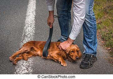 wants, 衝突, 革, 手掛かり, 犬, 手, ベルト, 人, 彼