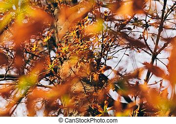 Warm Autumn Scene in the Park
