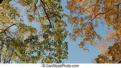 Warm autumn sun shining through colorful foliage treetops on beautiful sunny day.