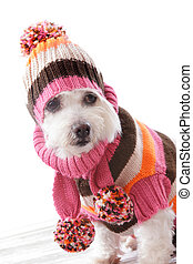 Warm dog wearing knitted beanie and jumper - Cute dog...