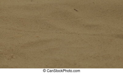 Warm sea sand on the beach