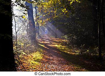 sunbeams on forest path