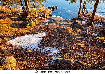 Warm sunlight in forest