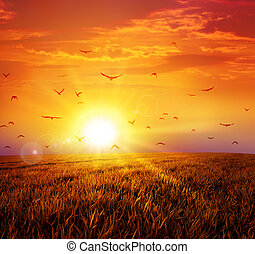 Intense sun setting down on a peaceful grass field with a flight of birds