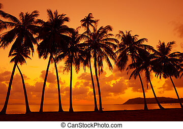 Warm tropical sunset on ocean shore with palm trees ...