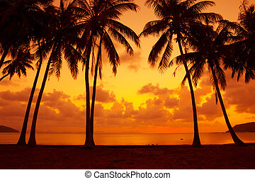 Warm vivid tropical sunset on ocean shore with palm trees