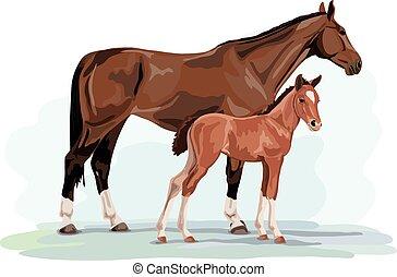 warmblood, cheval, -, jument, et, poulain
