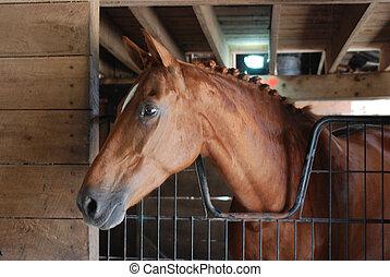 warmbood, лошадь, в, стойло