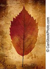 warme, ouderwetse , achtergrond, met, blad