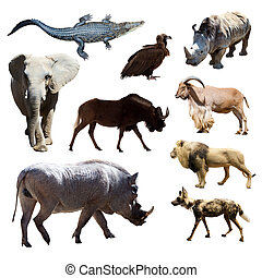 Warthog and other African animals. Isolated over white background