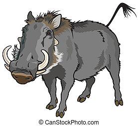 warthog, phocochoerus africanus, image isolated on white background