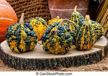 Warty pumpkins on a stump
