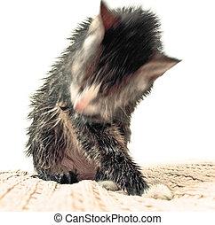 washing cat, partly isolated
