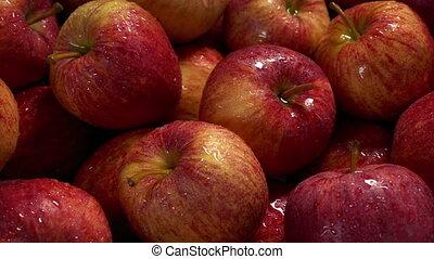 Moving past wet apples pile closeup