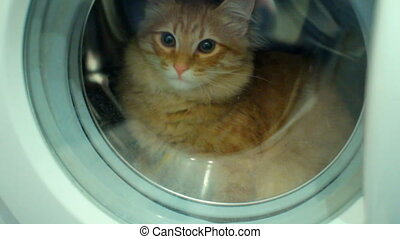 Washer machine and closed white cat