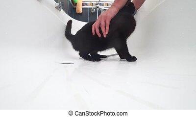 Washing a black cat in bathtub, 4k, action camera - Washing...