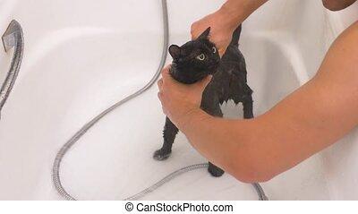 Washing a black cat in bathtub, 4k, slow-motion - Washing a...