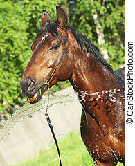 washing bay horse outdoor sunny day