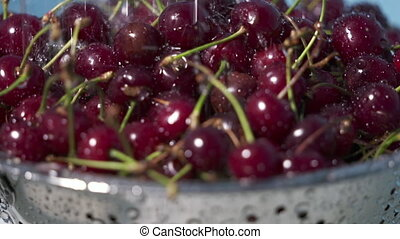 Washing fresh cherry under running water. Rinsing ripe red...