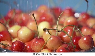 Washing fresh sweet cherry under running water. Rinsing ripe...