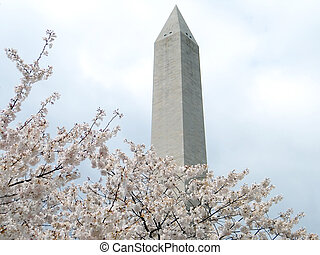 Washington Cherry Blossoms and Washington Monument 2011