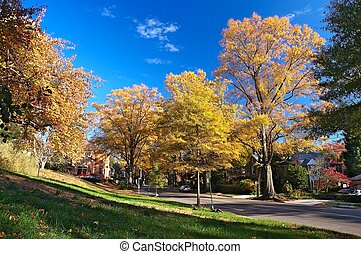 washington dc, automne