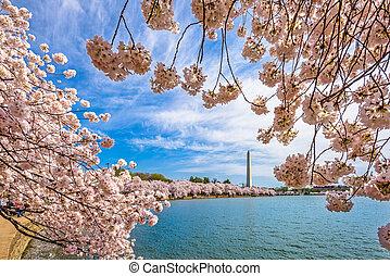 washington dc, en, primavera