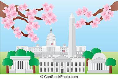 washington dc, orientační bod, s, třešně květ