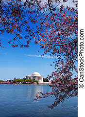 Washington DC - Jefferson national memorial with cherry...