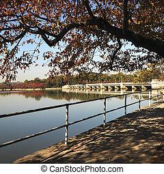 Washington, DC. - Tree by tidal basin in Washington, DC,...