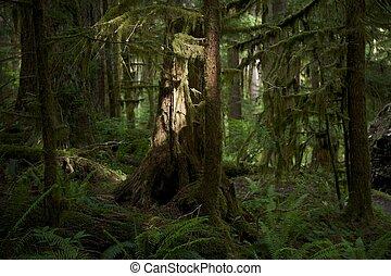 Washington Forest